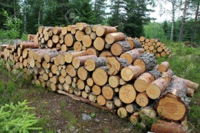 The EU intends to point out the volume of logging to the timber industry of Finland